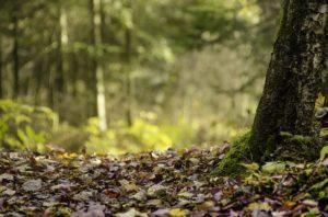 מה חשוב לדעת על עמודי תאורה לחצר או גינה