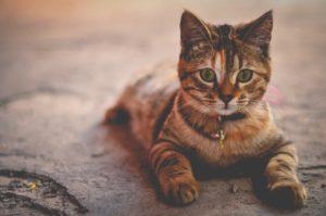חתול יושב